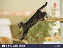 Cat Scratch Lounge Cat Scratch Stock Photos U0026 Cat Scratch Stock Images Alamy