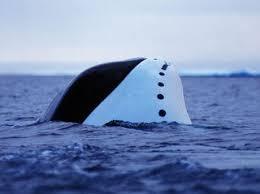 Whale Whale Species Wwf