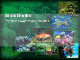 446 best animals powerpoint templates themes backgrounds images on