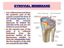 Back Knee Anatomy Anatomy Of The Knee Joint