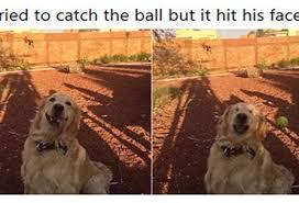 Dog Memes - dog memes archives funnymemes4u