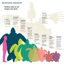 national aquarium ocean u0027s seven