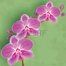 Flower Orchid Vector Illustration Of Orchid Flower On White Background Royalty