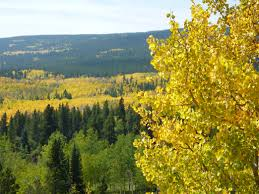 fall foliage in colorado 5 colorful adventures near boulder and