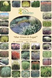 varrigated ornamental grasses maine search local maine