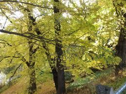 Kyneton Botanical Gardens Caspe River Walk Kyneton Botanical Gardens Picture Of Kyneton