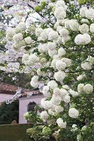 All Year Flowering Shrubs - 10 best landscaping ideas southern living