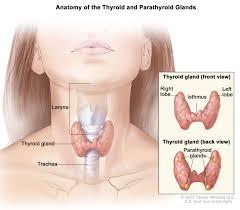 hypothyroidism u2013 detection diagnosis u0026 treatment