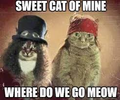 Purrrfect Meme - music is win slash would agree this is a purrfect meme facebook