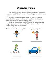 forces lesson 3 muscular force by mrs montroy u0027s educational