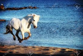 white mustang horse white horse running along the sea shore stock photo picture and
