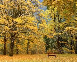 imagenes de otoño para fondo de escritorio fondos de pantalla otoño paisajes para fondo celular en hd 12 hd