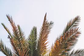 free stock photos of palm tree pexels
