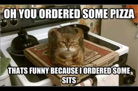 Clean Cat Memes - 21 funny and silly cat memes random funny cat