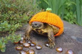 gafunkyfarmhouse this n that thursdays animal themed gafunkyfarmhouse this n that thursdays cozy autumn images