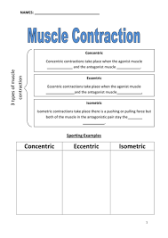 muscle contractions worksheet by beckie shank teaching resources