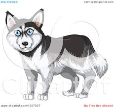 clipart of a blue eyed siberian husky dog royalty free vector