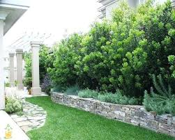 Create Privacy In Backyard Small Garden Trees For Privacy U2013 Exhort Me