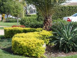 native plants for hedging tropical hedges a primer list pictures and articles