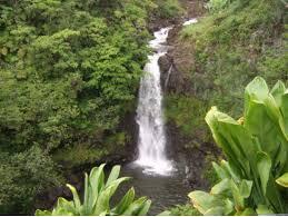 World Botanical Gardens Hilo World Botanical Garden Waterfall Walking Tour Big Island