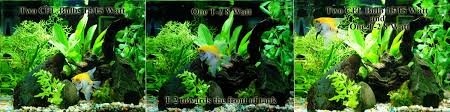 best led light for planted tank t2 subminiature aquarium lights review planted reef fish