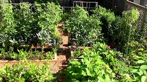 How To Grow A Vegetable Garden In Pots Image Of Best Fruits And Vegetables To Grow In A Small Garden