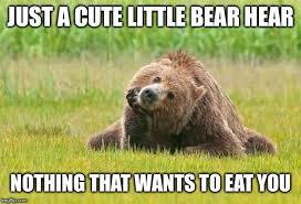 Funny Bear Meme - image tagged in funny funny memes funny meme bear imgflip
