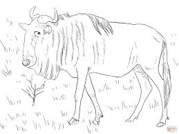 realistic blue wildebeest coloring page free printable coloring