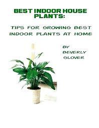 best indoor house plants houseplants for sale indoor plants uk evaero co