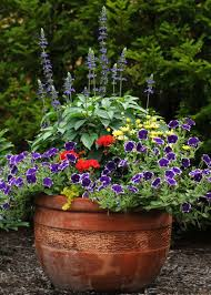 Plant Combination Ideas For Container Gardens 7 Color Combos That Work For Beautiful Container Gardens Garden Club