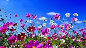Beautiful Images Desktop Wallpaper Beautiful Spring Scenes Wallpapersafari