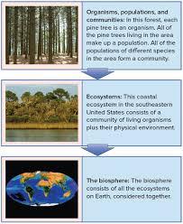 ecology introduction video ecology khan academy