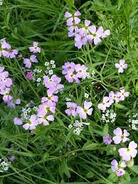 wild flowers in wild meadows free images nature meadow flower country green herb garden