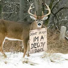 Funny Deer Memes - 139 best funny hunting things images on pinterest hunting stuff