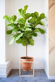 diy decor trend elevated plant stands plant stands figs and