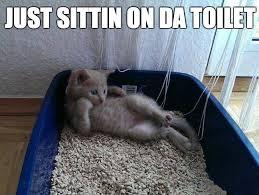 Cat Sitting Meme - cat sitting on da toilet weknowmemes