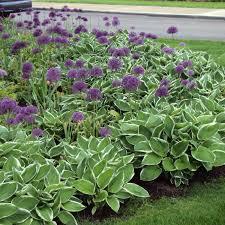 small garden ideas perennial flower mehmetcetinsozler com