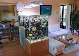cuisine unique fish tanks ideas for your home decoration home