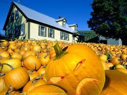 cute pumpkin wallpaper kawaii halloween wallpaper wallpapersafari