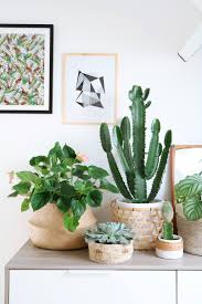 Home Plant Decor How To Shop U0026 Get A New Look At Home Without Spending A Dime
