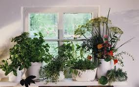 Garden Fertilizer Types - how to properly fertilize an indoor herb garden
