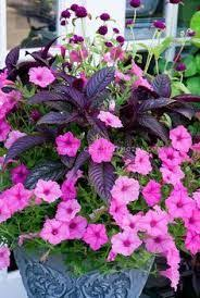 85 best plants images on pinterest flower gardening flowers and