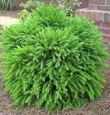 Flowering Shrubs For Partial Sun - 858 best a shrubs images on pinterest gardens plants and