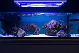 t5 lighting fixtures for aquariums giesemann ati t5 lamp comparison pics par and a whole mess of