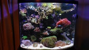 Floating Aquascape Reef2reef Saltwater And Reef Aquarium Forum - foam wall instructable a full how to step by step guide