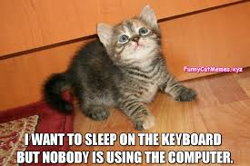 Sleeping Cat Meme - the kitten would like to sleep on the keyboard funny cat meme