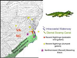 alligators in map river mud no alligators in virginia zero none