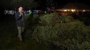 grapevine trees free christmas trees in grapevine nbc 5 dallas fort worth