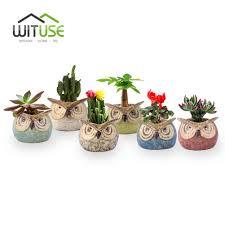 Succulent Plant Aliexpress Com Buy Wituse Owl Clay Garden Pot Desktop Succulent