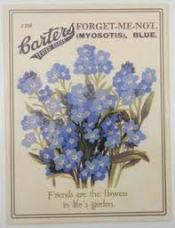 forget me not seed packets forget me not flower poem playle s forget me not flowers with